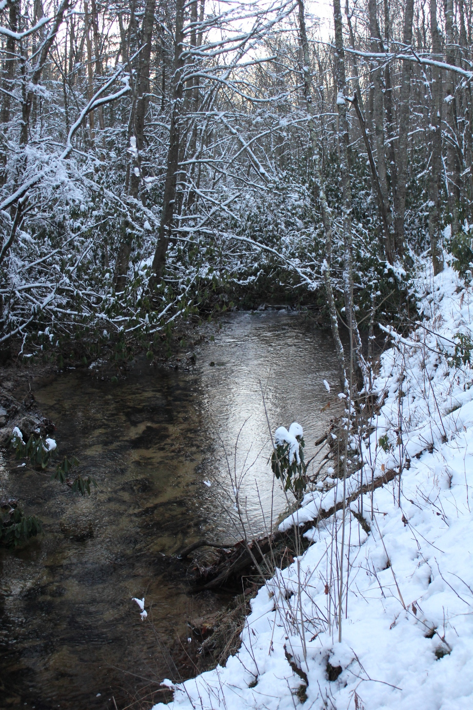 Winter Small Creek Fly Fishing