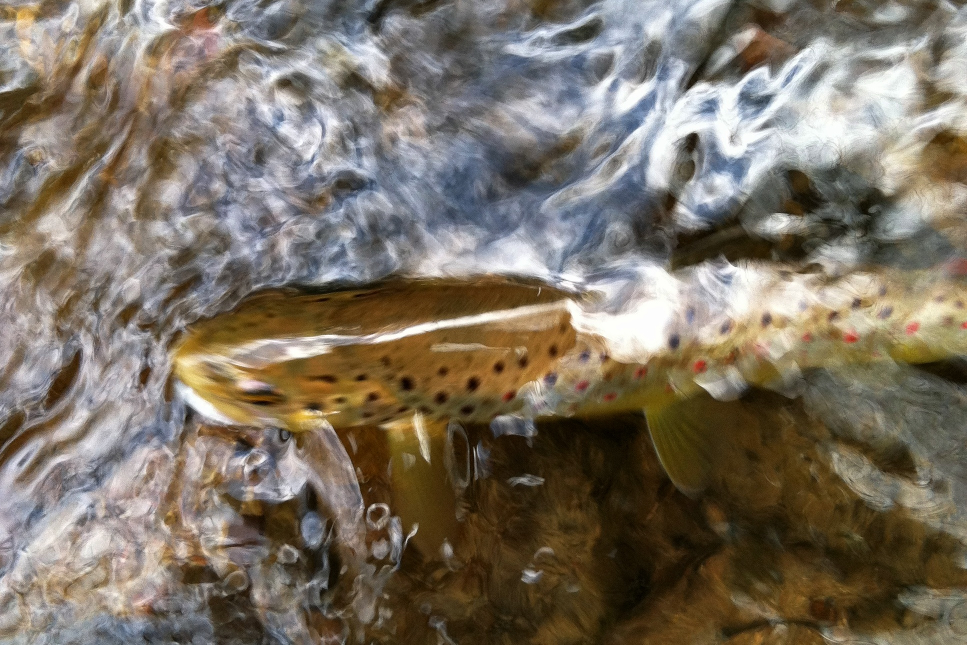 how to trout fish in a creek