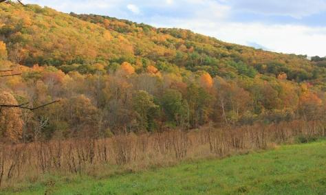 Hidden Valley Colors