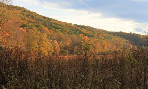 The Mountainside Aglow with Color