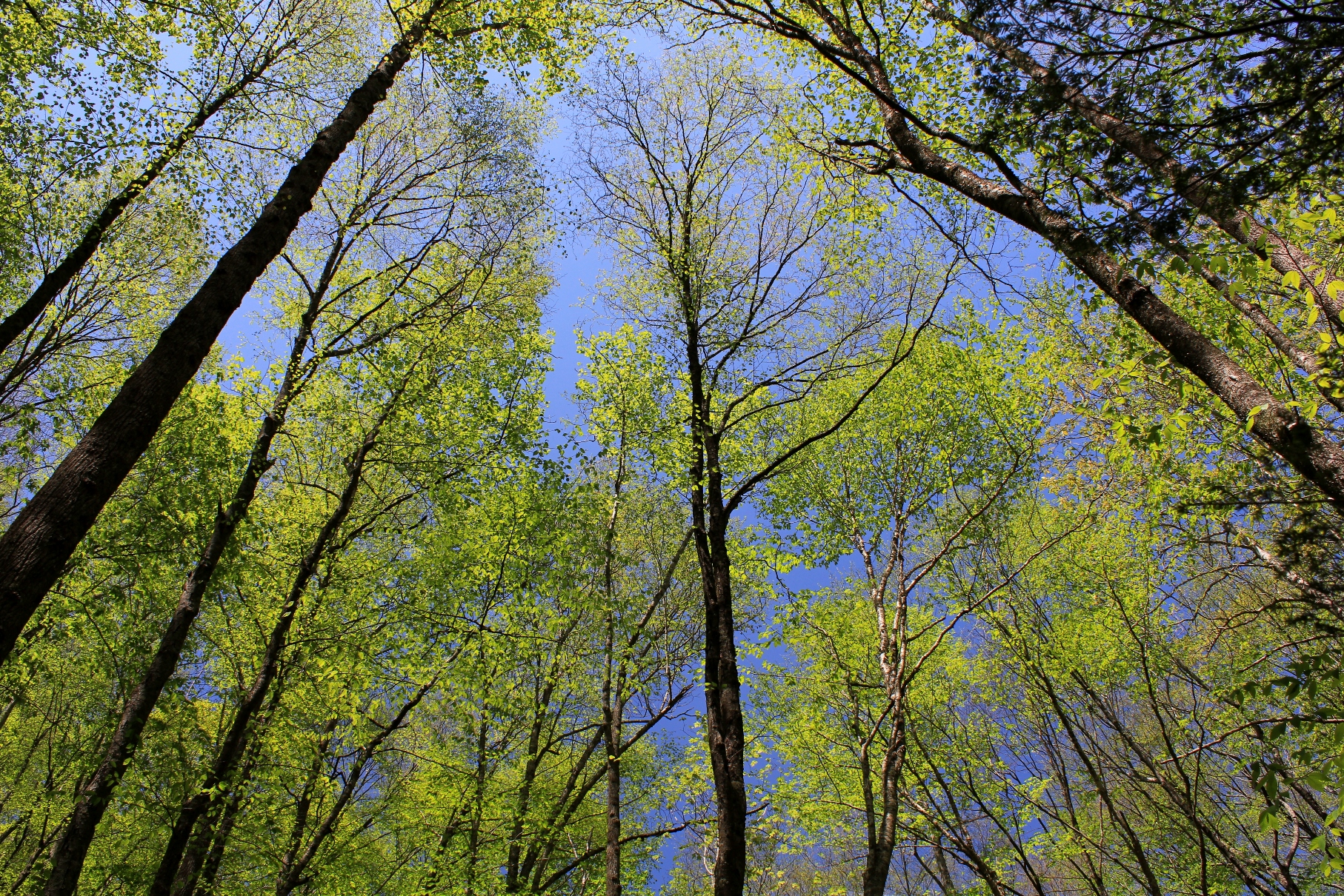 Leafing Out, May 11, 2014