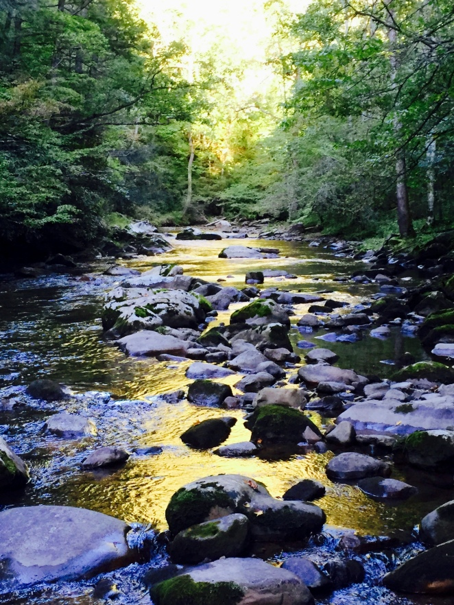 Whitetop Laurel Creek, Late Evening, Monday, September 14, 2015